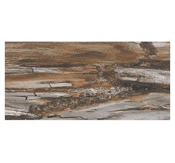 Timless Fossil